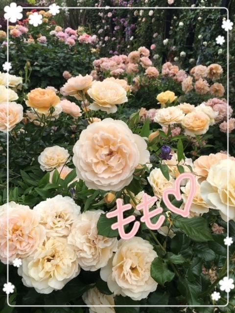 「(*^^*)」05/23(水) 20:56 | ももの写メ・風俗動画