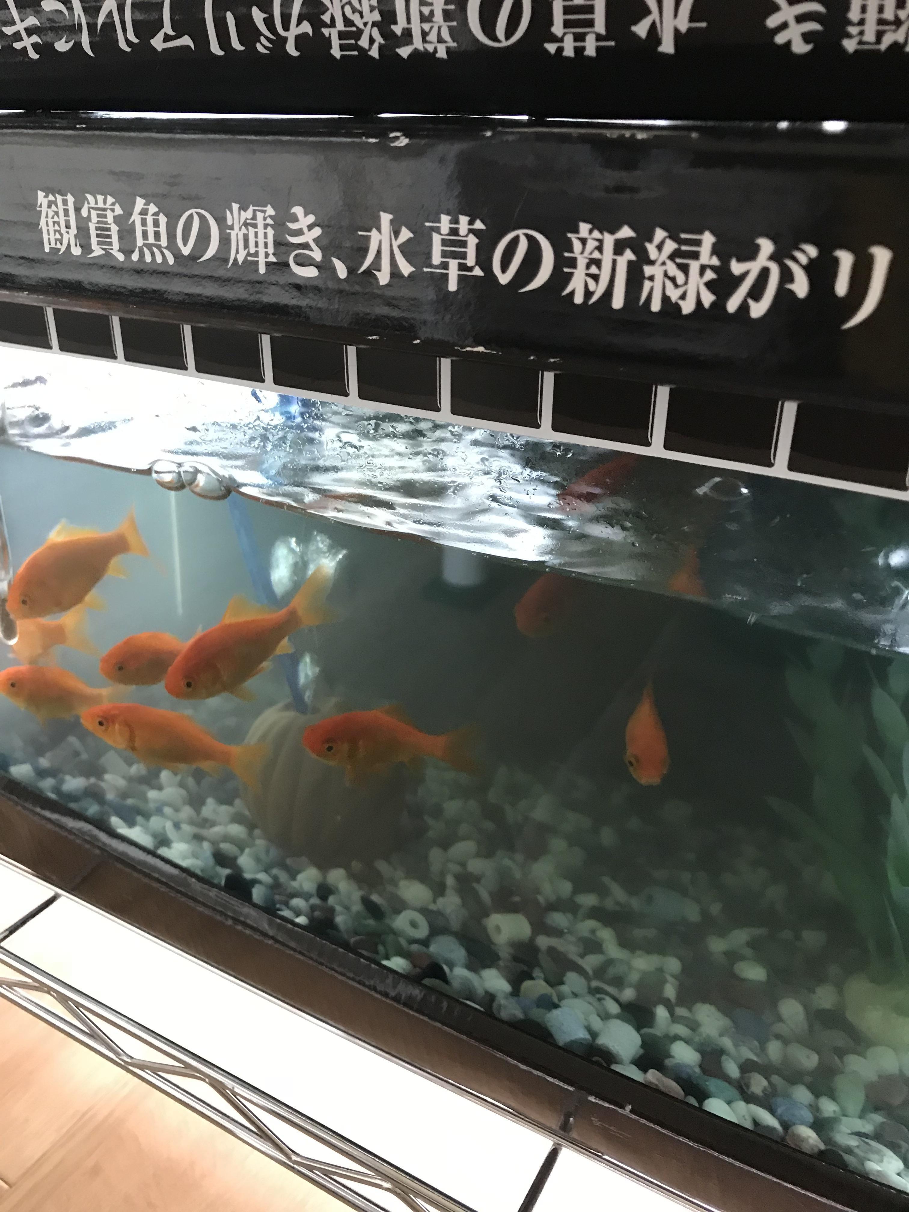 「こんにちは(^O^)」05/24(木) 12:12   ことみの写メ・風俗動画