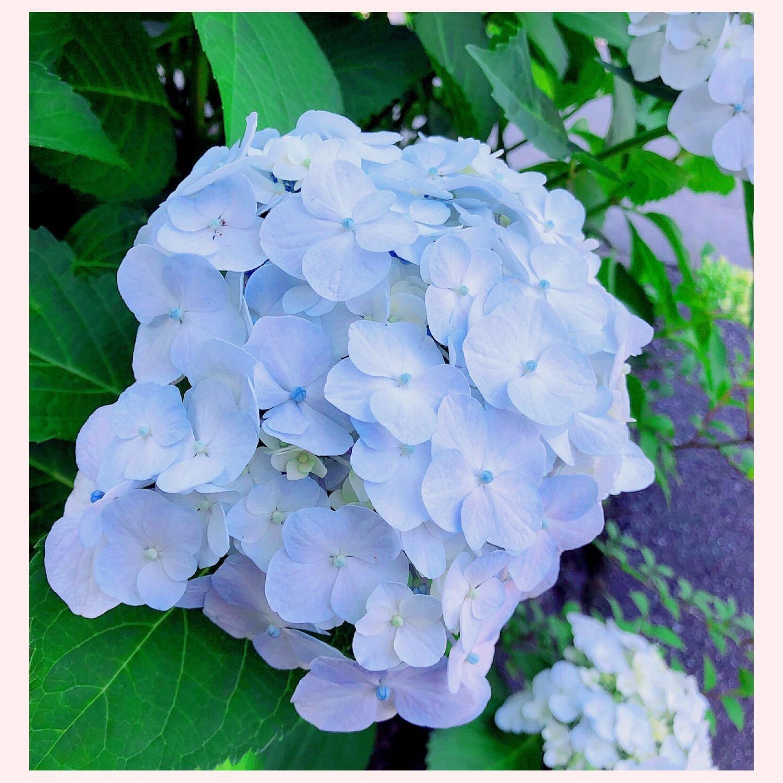 「お散歩中に☆」06/04(月) 16:55   ひなたの写メ・風俗動画