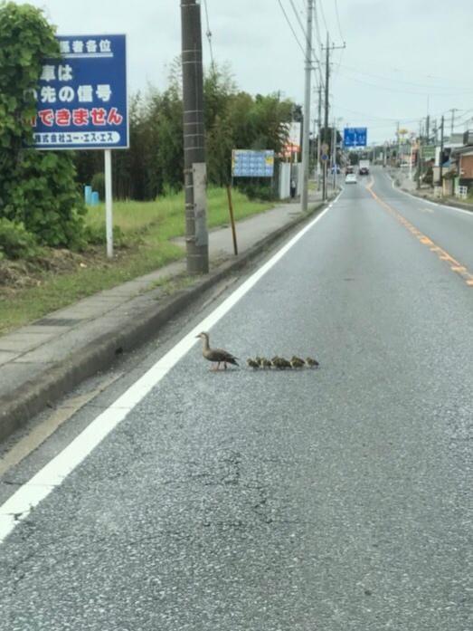 「❤️カルガモ親子」06/18(月) 08:57   みくの写メ・風俗動画