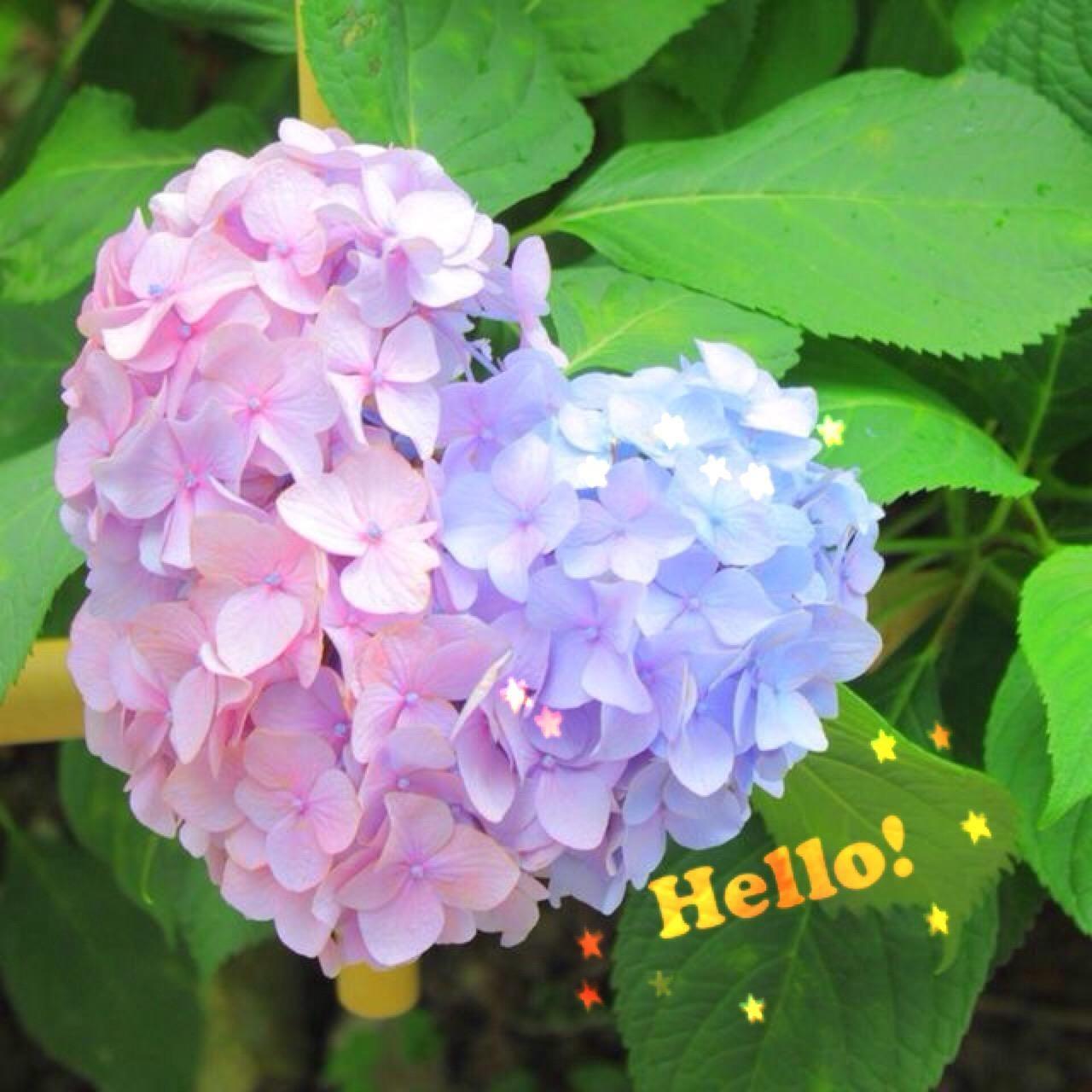 「昨日はー…」06/18(月) 20:44 | 小渕夫人の写メ・風俗動画