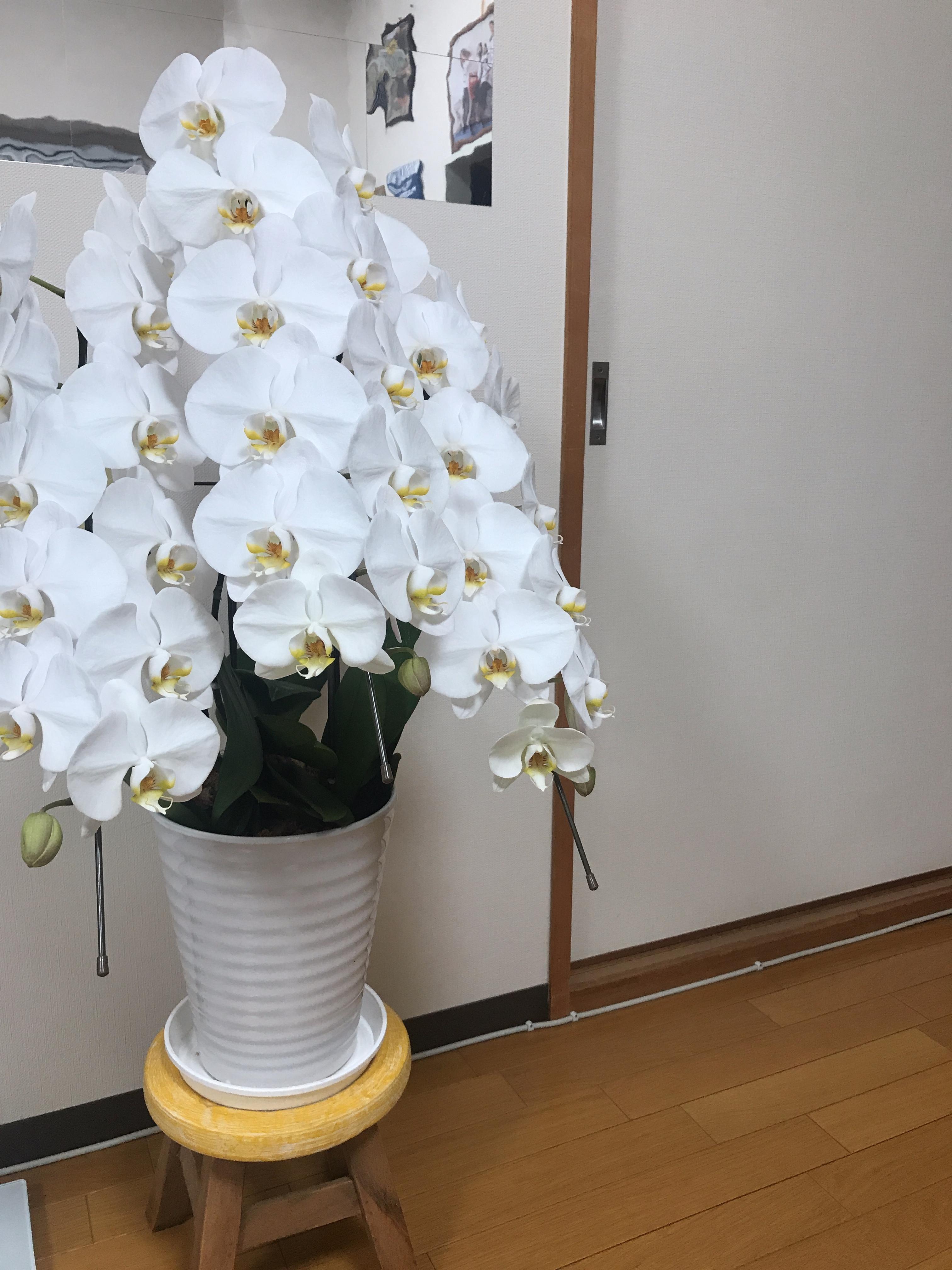 「地震…」06/19日(火) 00:14   羽音【ネオン】の写メ・風俗動画