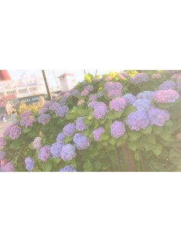 ひなの「これから〜」06/19(火) 14:04 | ひなのの写メ・風俗動画