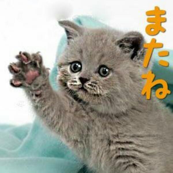 智里(ちさと)「ありがとう!」06/20(水) 16:30 | 智里(ちさと)の写メ・風俗動画
