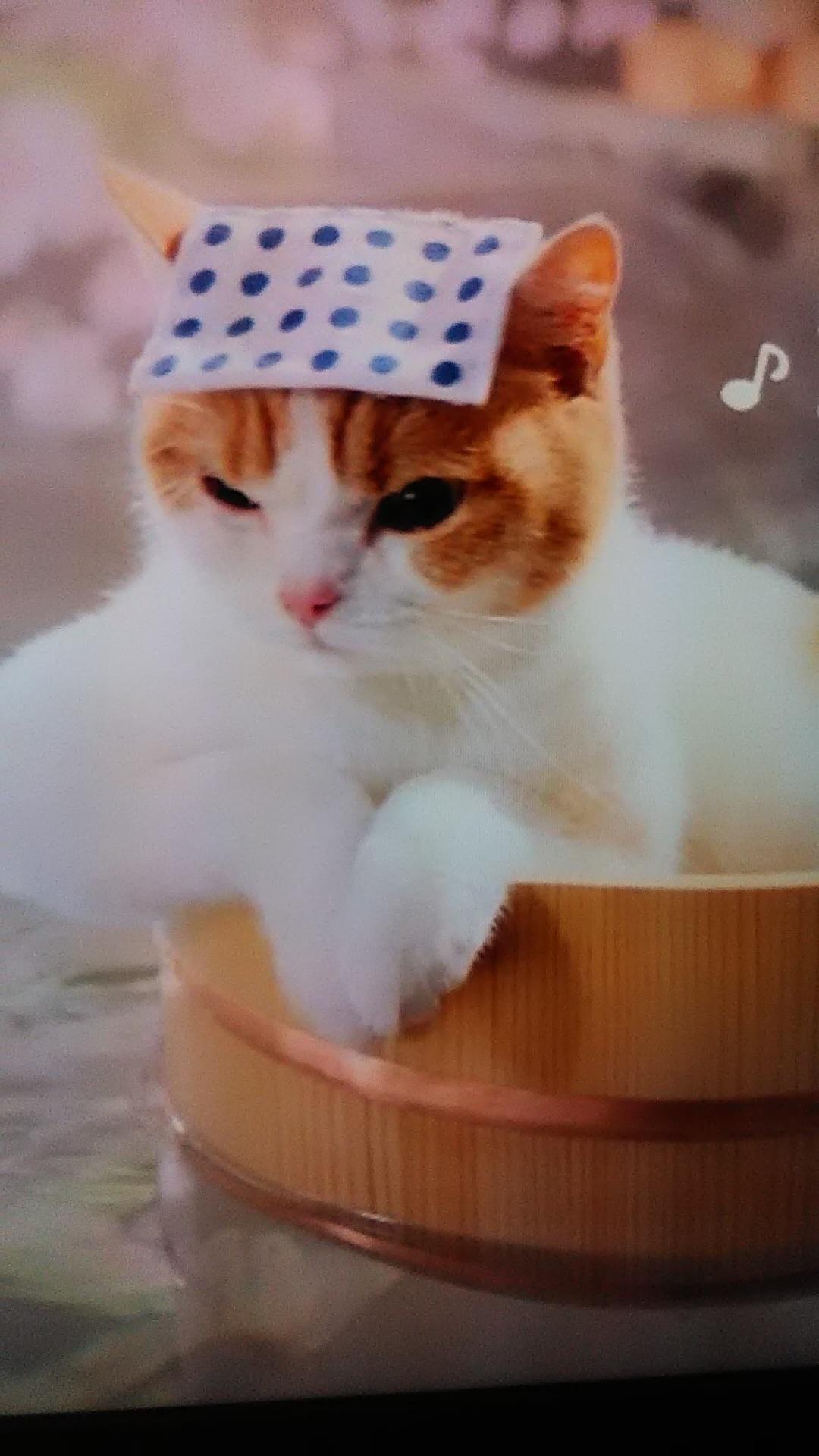 安奈【あんな】「お疲れ様です」06/23(土) 20:05   安奈【あんな】の写メ・風俗動画