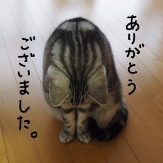 「本日も!!( * ´_` * )」06/13(月) 12:00 | すみれの写メ・風俗動画