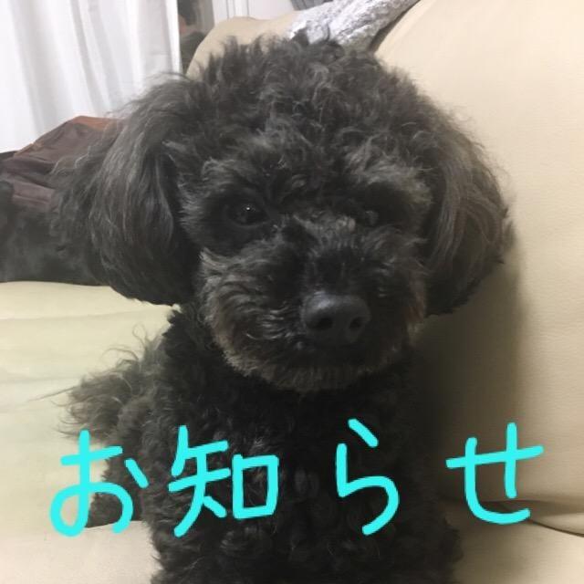 「お知らせ」07/06(金) 19:54 | 城川咲の写メ・風俗動画