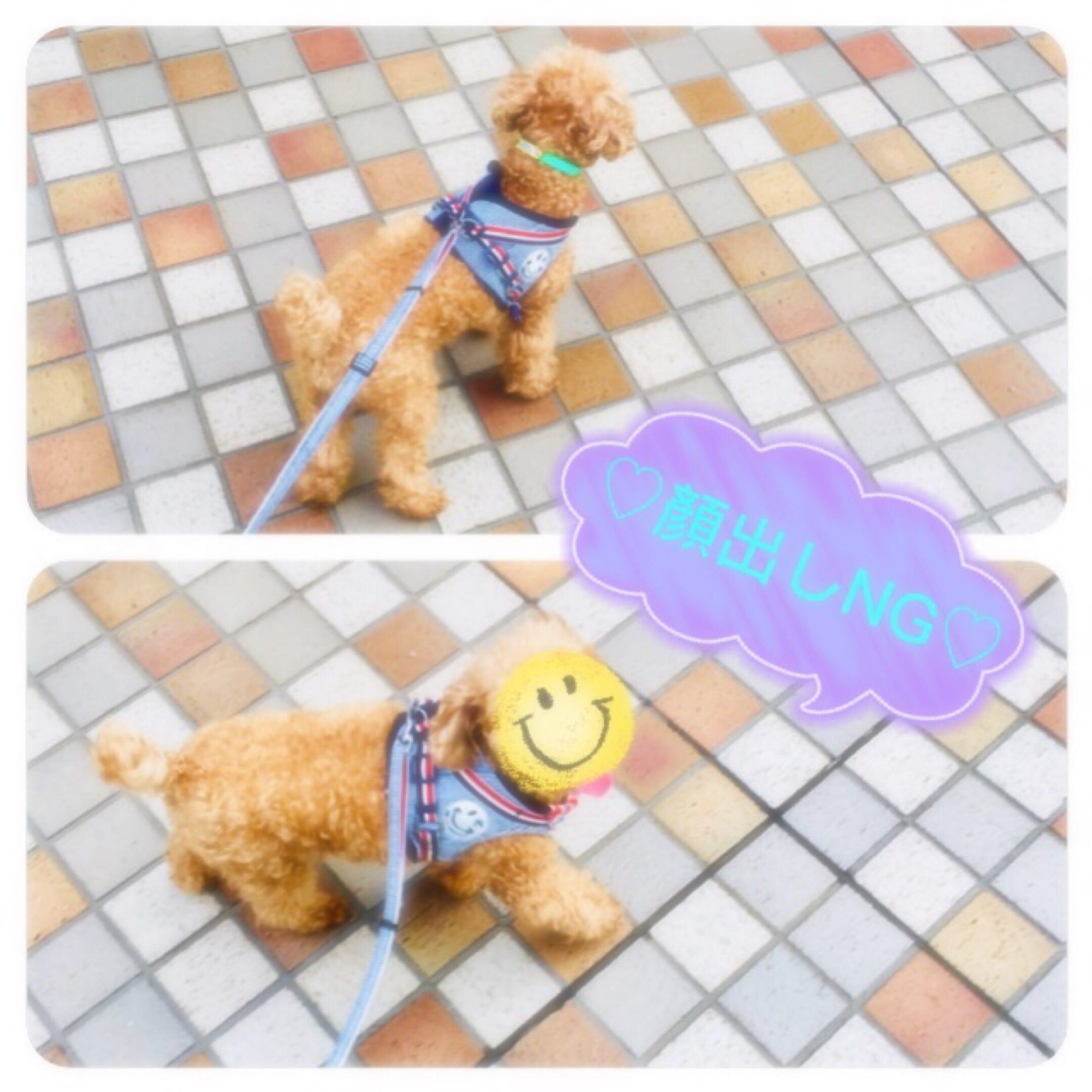 「♡お散歩ʕ•ᴥ•ʔ♡」07/08(日) 19:07   まいかの写メ・風俗動画