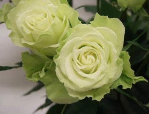 「お休みのお知らせ」07/15日(日) 09:59 | しのぶの写メ・風俗動画