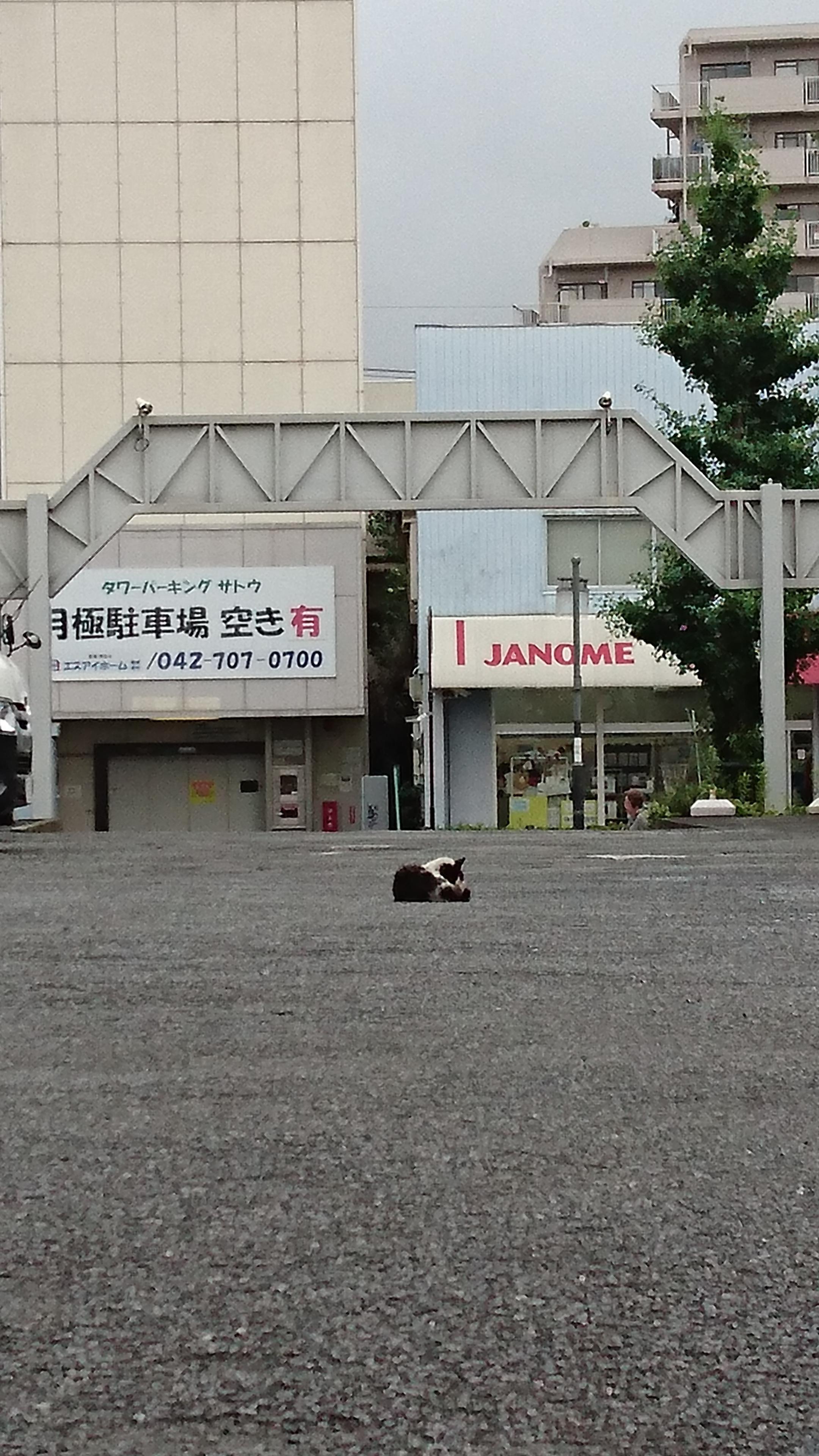 「かゆいかゆい」07/16(月) 10:04 | さくらの写メ・風俗動画