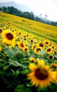 「大好きなお花 ♪v(*'-^*)^☆」07/19(木) 22:18    香坂夫人の写メ・風俗動画