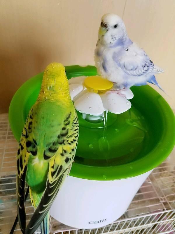 「循環式の水浴び器☆」07/22日(日) 02:29   花咲ななみの写メ・風俗動画