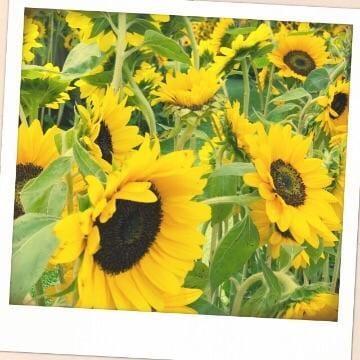 もか「夏の花」07/22(日) 09:42   もかの写メ・風俗動画