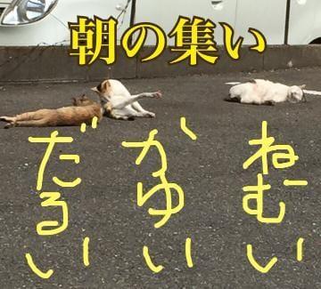 「おはようございます\(  ・ω・ )/」08/06(月) 09:26 | 浅野 結衣の写メ・風俗動画