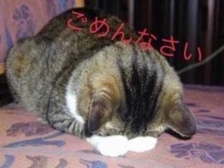 「申し訳ありません」08/10(金) 21:06 | 友梨奈(ゆりな)の写メ・風俗動画