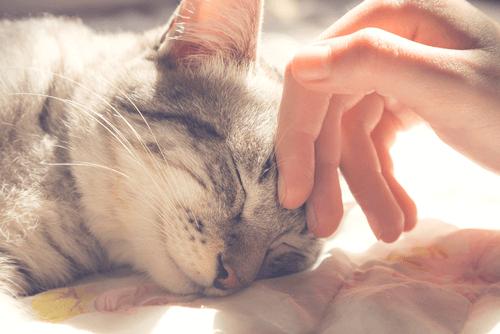 「goodmorning(ノ)`ω´(ヾ)」08/14(火) 07:38 | まことの写メ・風俗動画