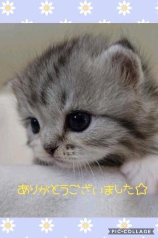 「☆ 14日のお礼です ☆」08/16日(木) 01:26   星空 きれいの写メ・風俗動画