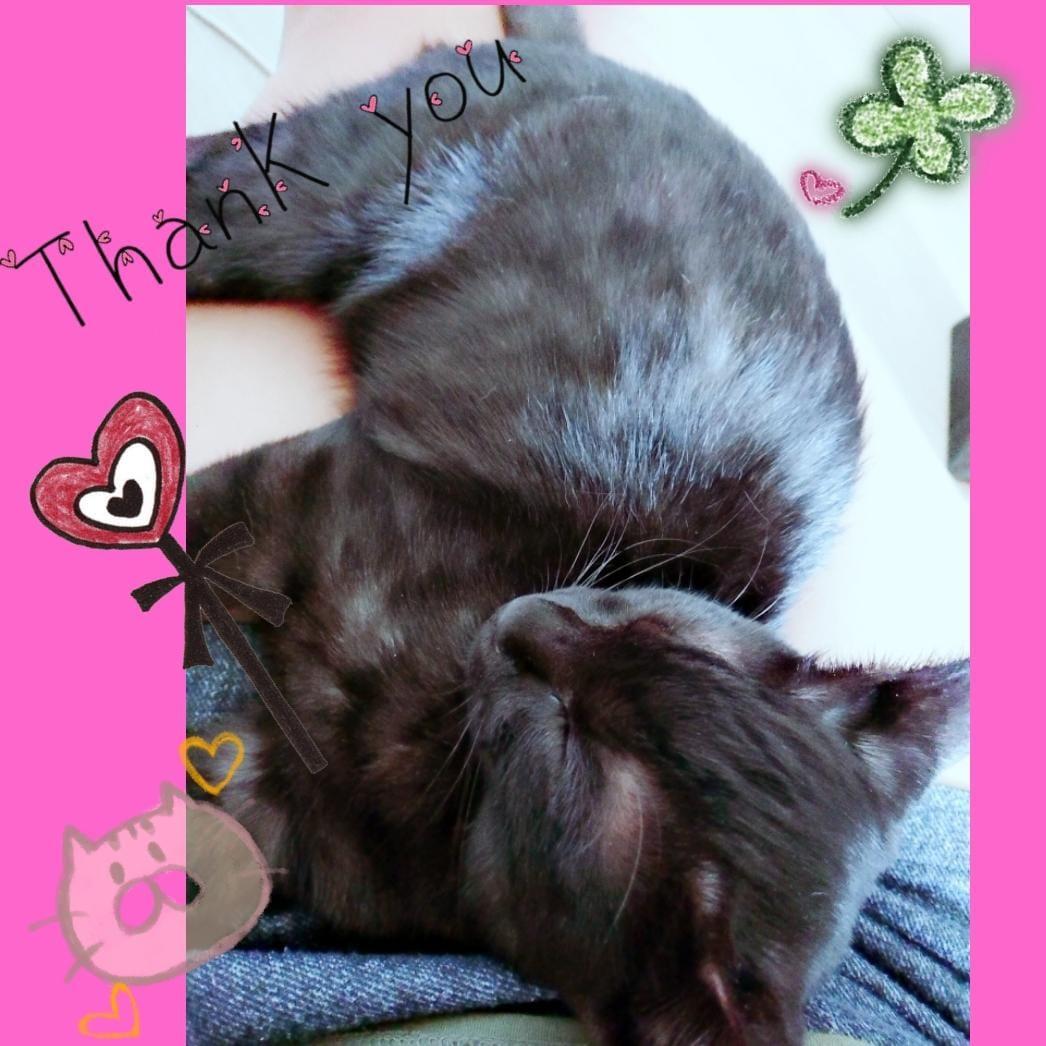 「おやすみなさい?」08/18(土) 04:21   ハルノの写メ・風俗動画
