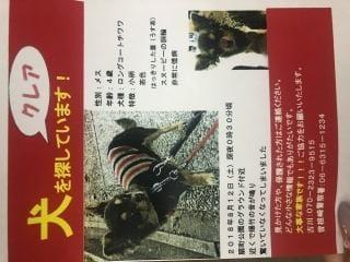 「見つけて…(´◦ω◦`)」08/18日(土) 19:27 | 王妃 クレアの写メ・風俗動画