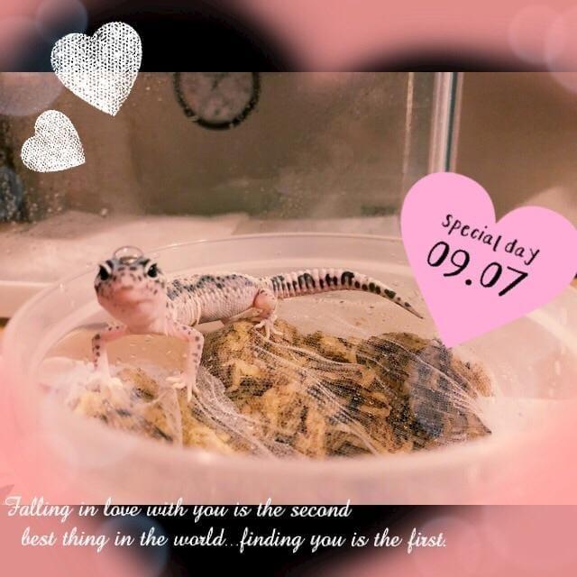 「【お久しぶりに】ありがとう(´∀`?)【 楽しかった】」09/07(金) 20:21   しずかの写メ・風俗動画