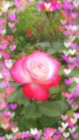 「こんばんは(´-ω-`)」09/11(火) 20:18 | れんかの写メ・風俗動画