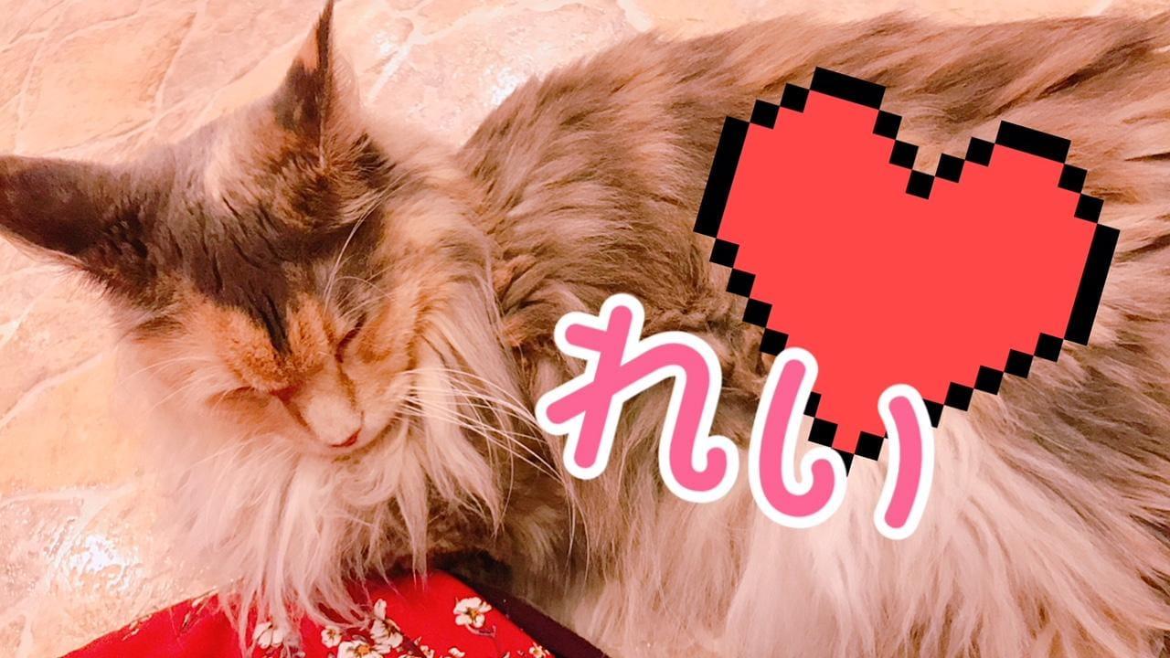 「ネコカフェ!」09/13日(木) 21:52 | れいの写メ・風俗動画