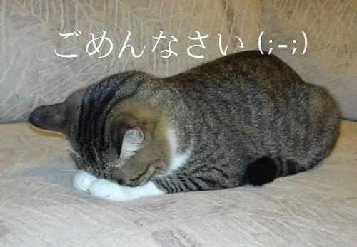 「☆ごめんなさい☆」09/17日(月) 08:10 | めぐの写メ・風俗動画