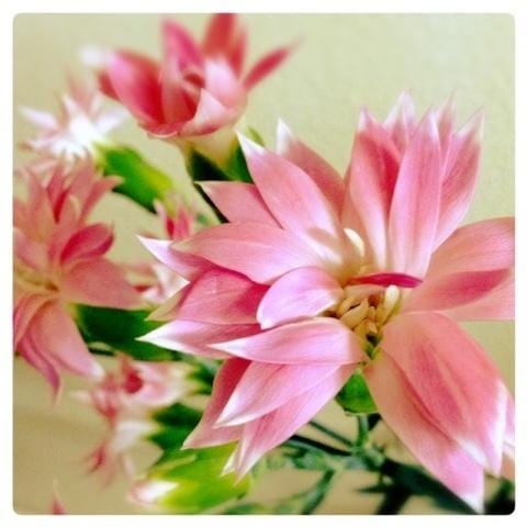 「ねこ科のわたし」09/19(水) 04:21 | りん五反田の写メ・風俗動画