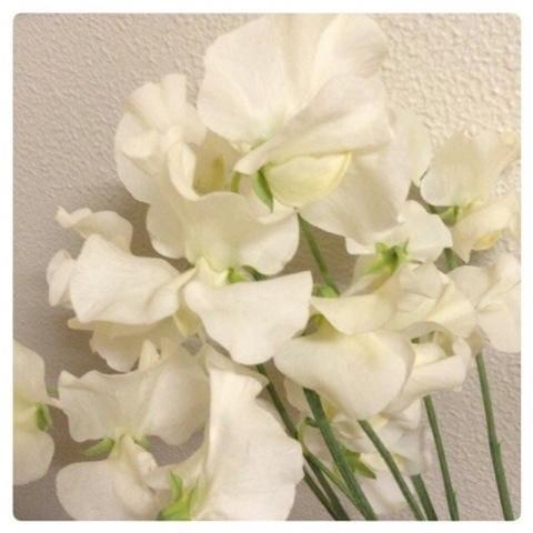 「りぼん」09/21(金) 03:55 | りん五反田の写メ・風俗動画