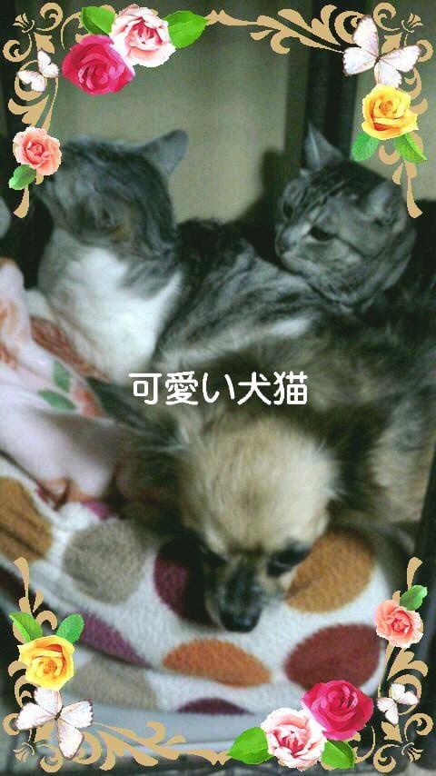 「今日は、また、暑くなりますね。」09/23日(日) 03:00 | 岡崎の写メ・風俗動画