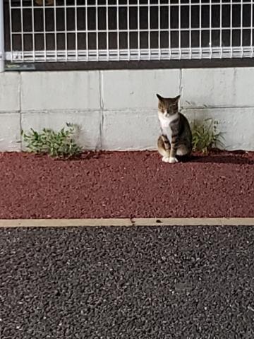 「ぬこ発見!」09/28(金) 23:06   唯(ゆい)の写メ・風俗動画