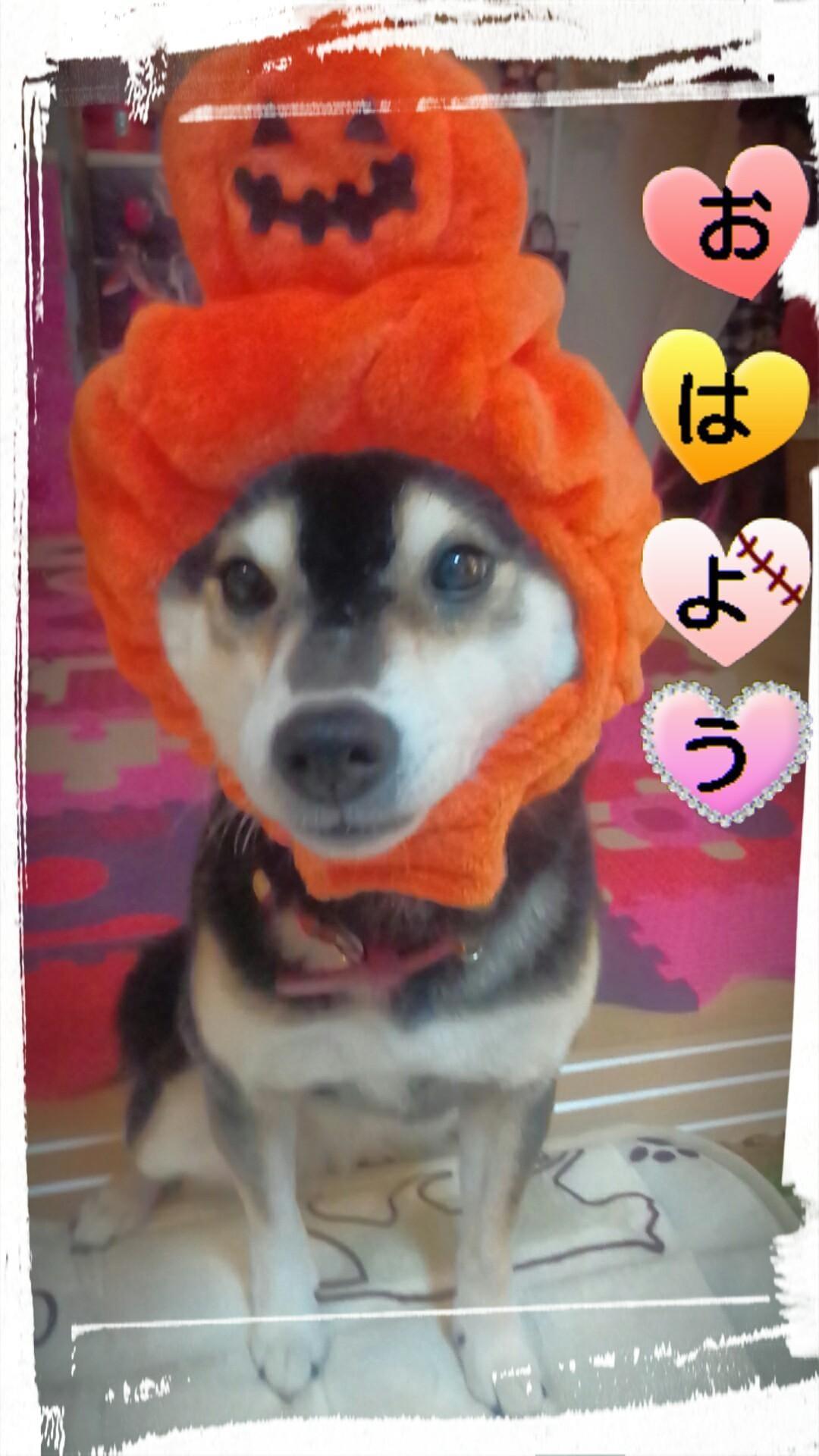 「愛犬ちゃん」10/11(木) 09:42   ささの写メ・風俗動画
