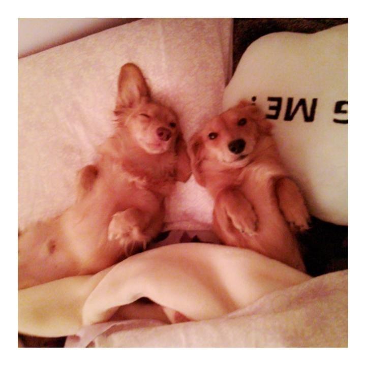 あん「犬の10箇条【無音動画付】」10/16(火) 02:27 | あんの写メ・風俗動画