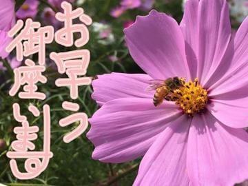 「安全に。。♪(๑ᴖ◡ᴖ๑)♪」10/19(金) 08:15 | みそら【金妻VIP】の写メ・風俗動画