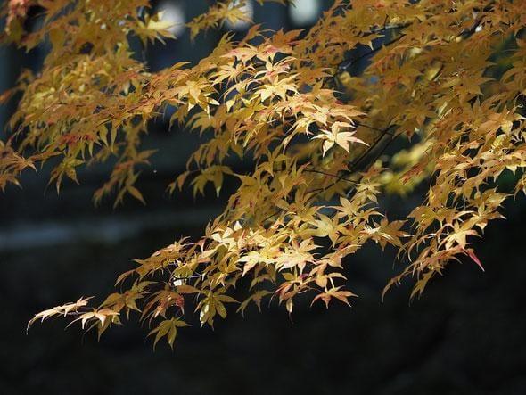 寺山美鈴「ありがとうございます♪」10/20(土) 00:14 | 寺山美鈴の写メ・風俗動画