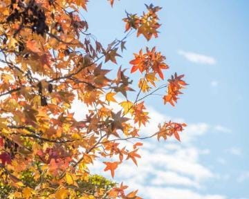 「紅葉を見に行こうよ」10/27(土) 19:00 | ゆずの写メ・風俗動画