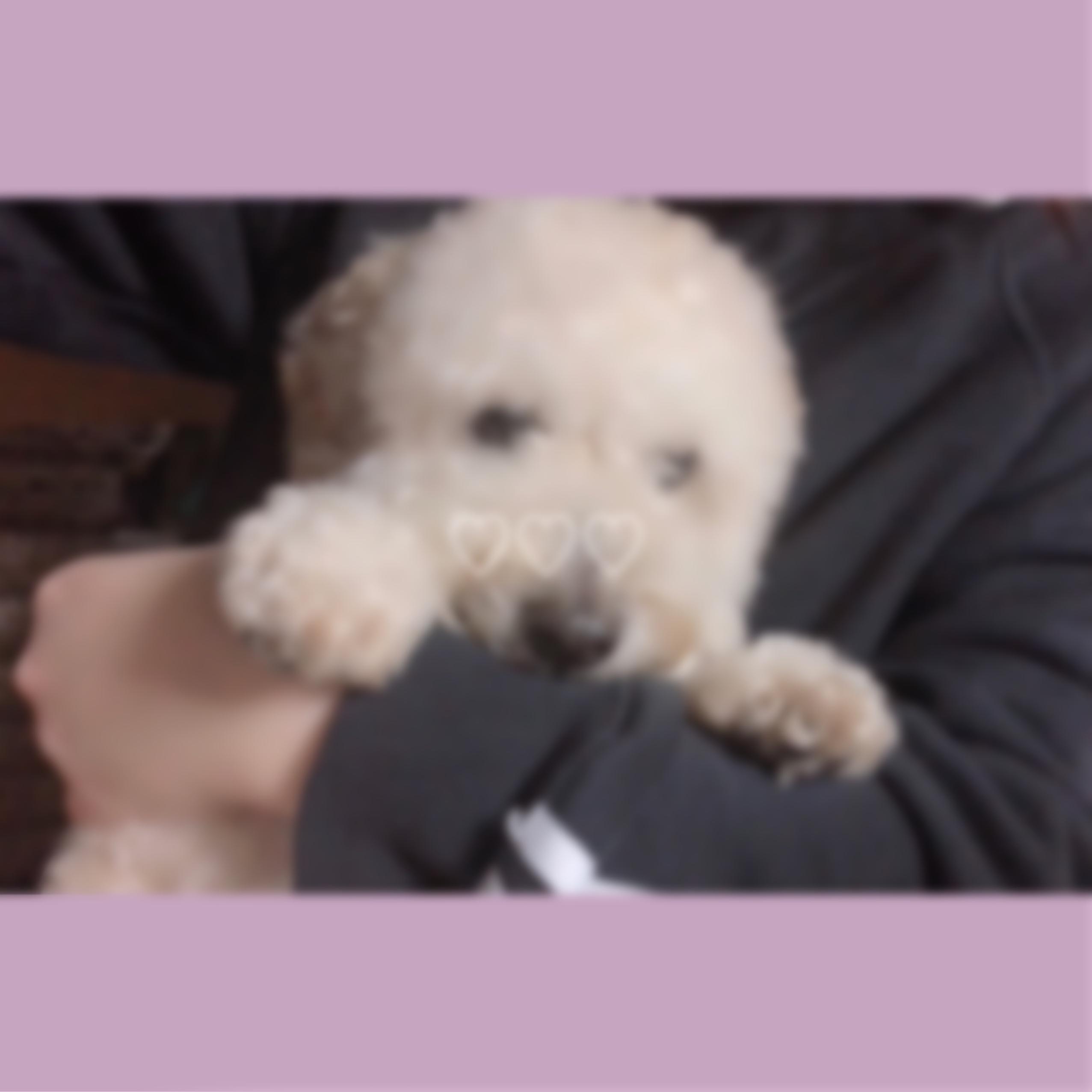 「ラスト!」11/09(金) 12:34   Kaera(かえら)の写メ・風俗動画