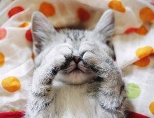 「おはよー??」11/10(土) 14:55   PS学園はる「はる」の写メ・風俗動画