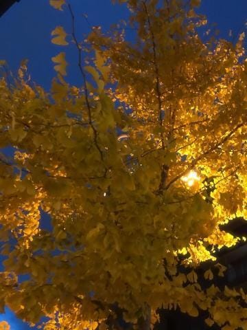 「こんにちわ(ノ´▽`)ノ♪」11/11(日) 17:32 | ちはるの写メ・風俗動画