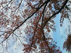 「こんばんわ!」11/12(月) 17:02 | リサの写メ・風俗動画