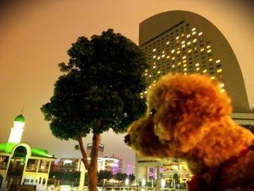 「横浜nanoだ」11/12日(月) 23:11 | なのはの写メ・風俗動画