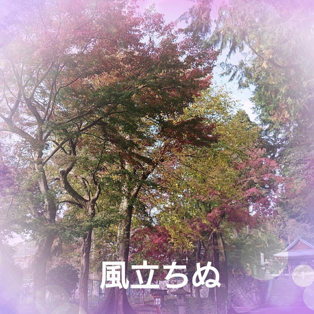 「こんにちは」11/13(火) 13:02 | 新田智子(にったともこ)の写メ・風俗動画