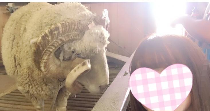 しき「羊が一匹」11/14(水) 00:19   しきの写メ・風俗動画