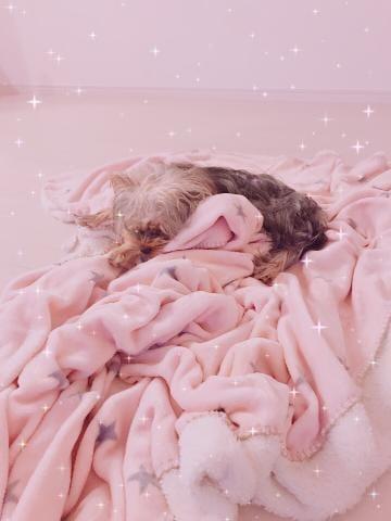 「寝た」11/15日(木) 20:33 | 由羅/ゆらの写メ・風俗動画