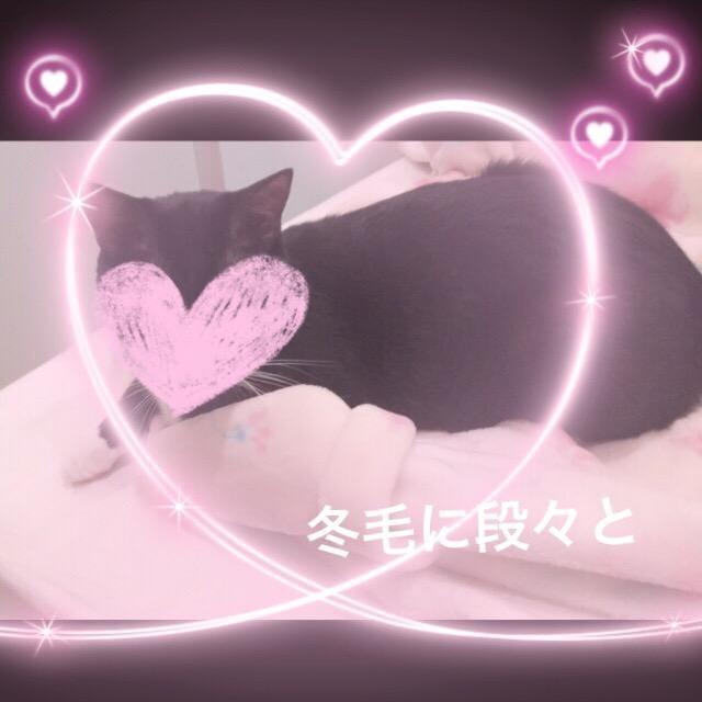 「冬毛になってきてて」11/15日(木) 21:43 | 広田の写メ・風俗動画