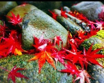 ココロ「秋だねぇ〜」11/16(金) 03:21 | ココロの写メ・風俗動画