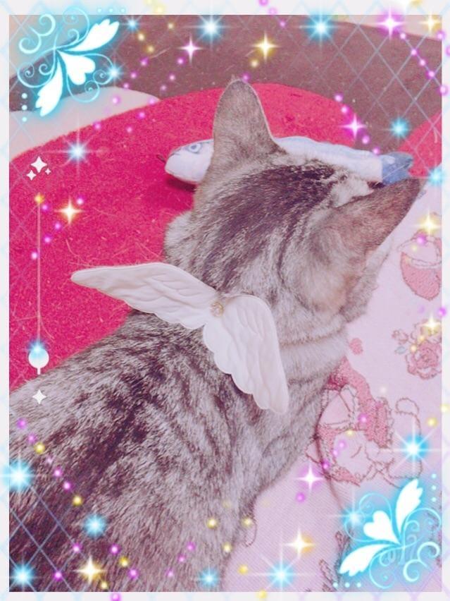 「翼を授けるっ♪」11/17(土) 01:20 | りおの写メ・風俗動画