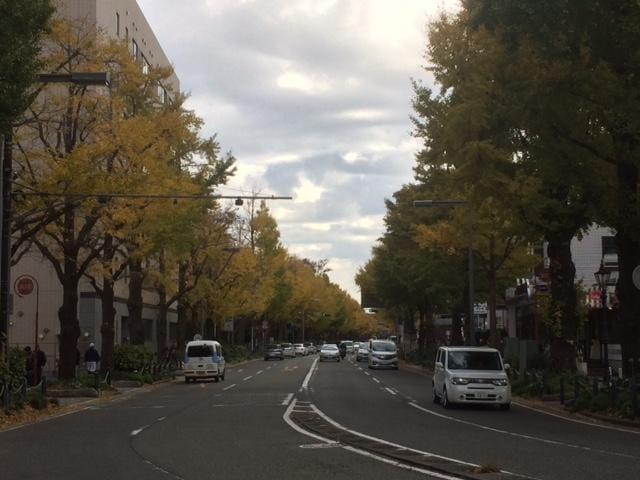 「銀杏並木...ももかより☆彡」11/18日(日) 11:32 | ももかの写メ・風俗動画