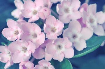 「おはな?」11/20日(火) 13:00 | 青山 ゆう奈の写メ・風俗動画