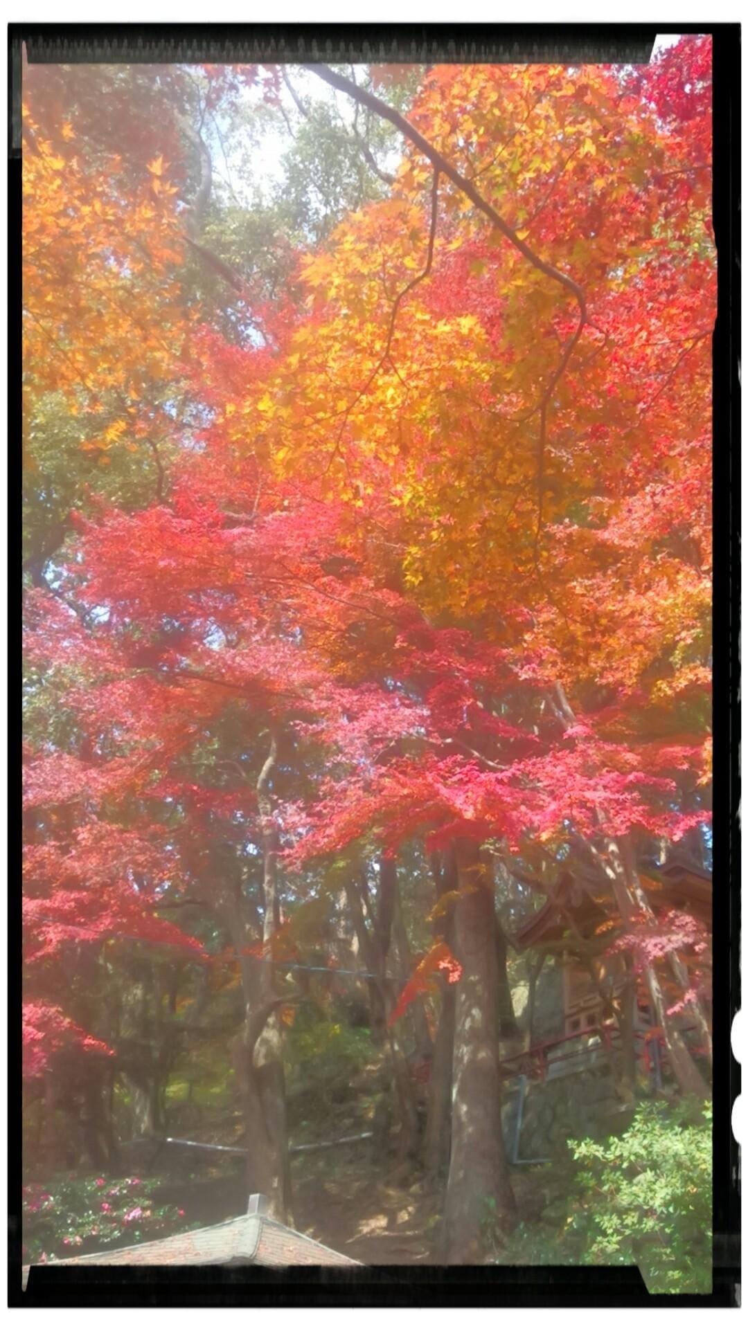 「紅葉が」11/20(火) 19:40   ささの写メ・風俗動画
